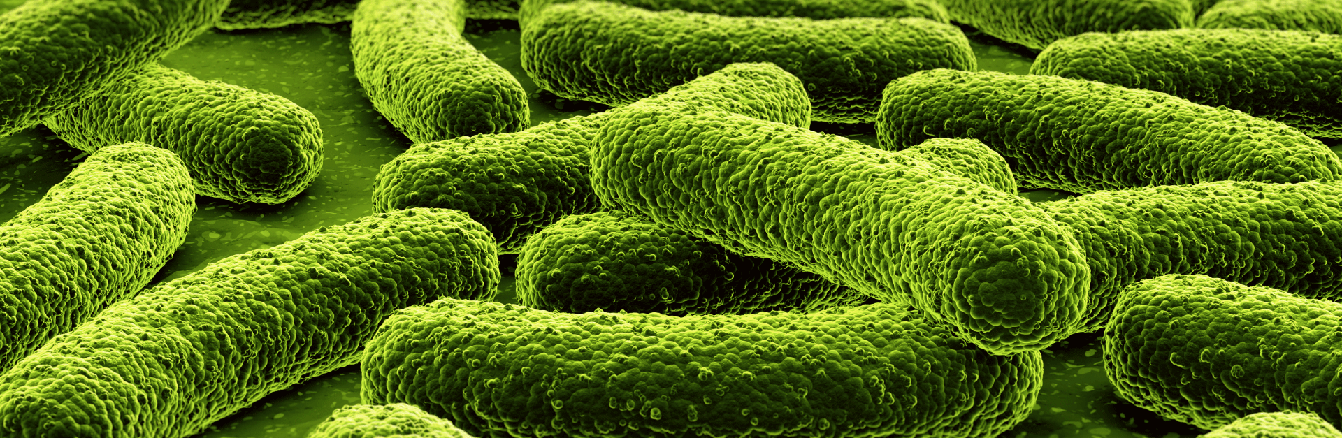 magna-site-banners-Lactobacillus-Gasseri-blog-pc